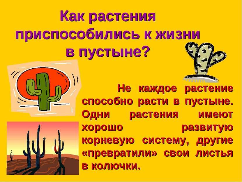 Как растения приспособились к жизни в пустыне? Не каждое растение способно ра...