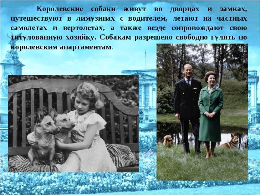 Королевские собаки живут во дворцах и замках, путешествуют в лимузинах с води...