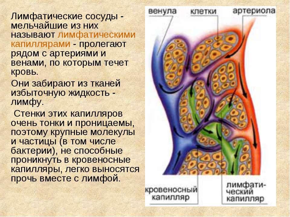 Лимфатические сосуды - мельчайшие из них называют лимфатическими капиллярами ...