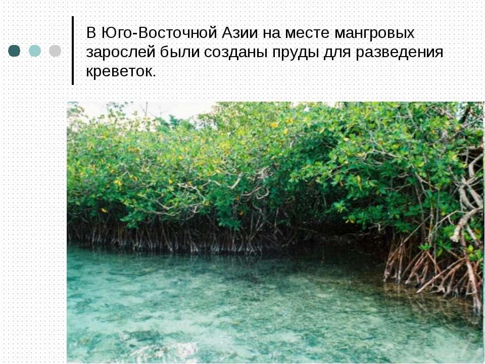 В Юго-Восточной Азии на месте мангровых зарослей были созданы пруды для разве...