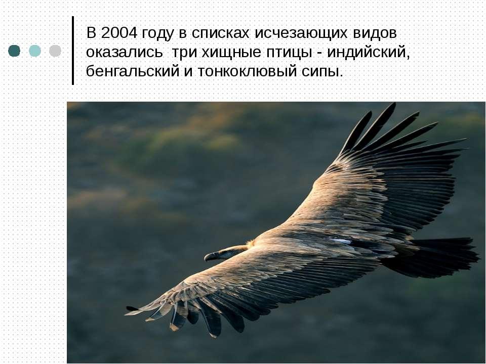 В 2004 году в списках исчезающих видов оказались три хищные птицы - индийский...