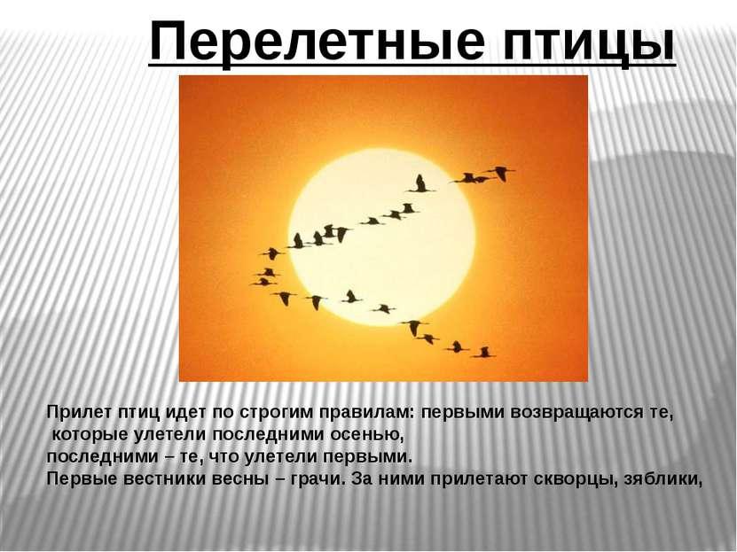 Перелетные птицы Прилет птиц идет по строгим правилам: первыми возвращаются т...