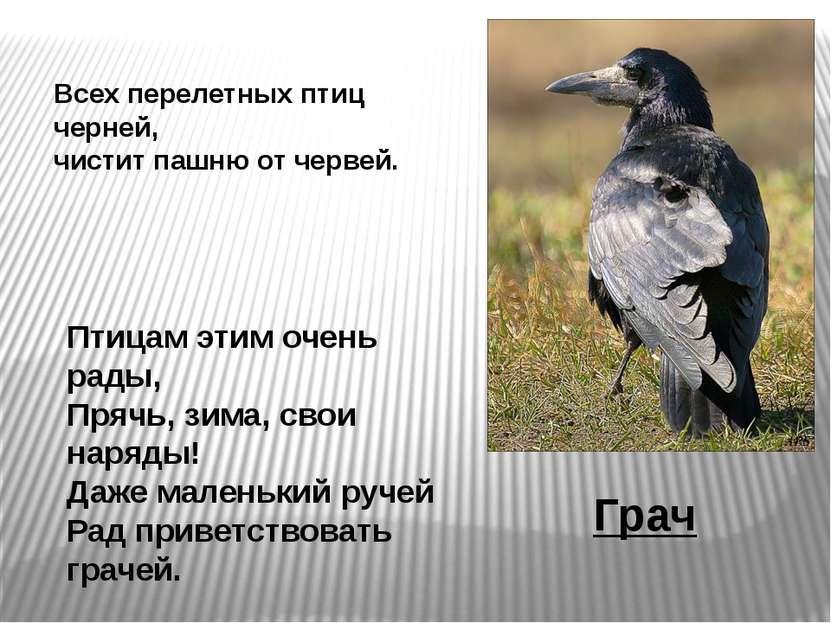 Птицам этим очень рады, Прячь, зима, свои наряды! Даже маленький ручей Рад пр...