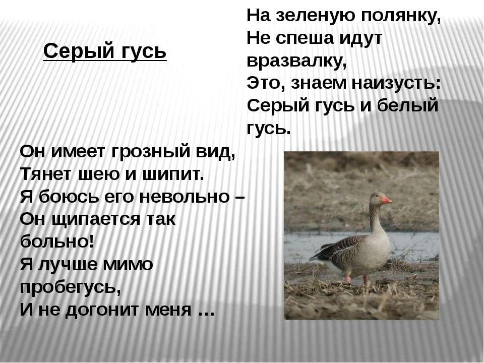 Серый гусь На зеленую полянку, Не спеша идут вразвалку, Это, знаем наизусть: ...