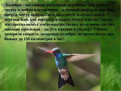 Колибри – настоящие воздушные акробаты. Они умеют летать в любом направлении ...