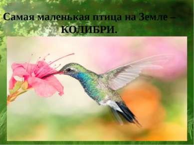 Самая маленькая птица на Земле – КОЛИБРИ.