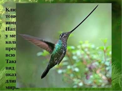 Клюв у колибри тонкий и длинный, иногда очень длинный. Например, умечеклювог...
