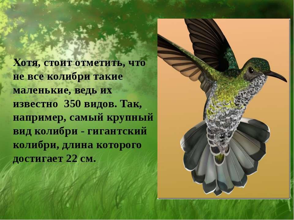 Хотя, стоит отметить, что не все колибри такие маленькие, ведь их известно 35...