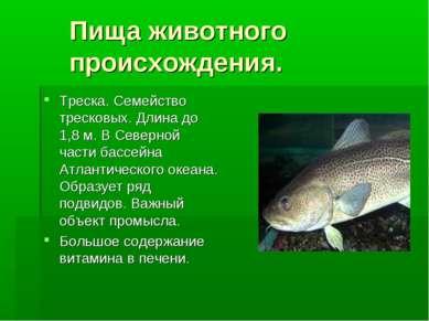 Пища животного происхождения. Треска. Семейство тресковых. Длина до 1,8 м. В ...