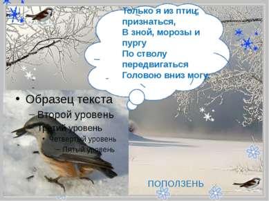 - Только я из птиц, признаться, В зной, морозы и пургу По стволу передвигат...