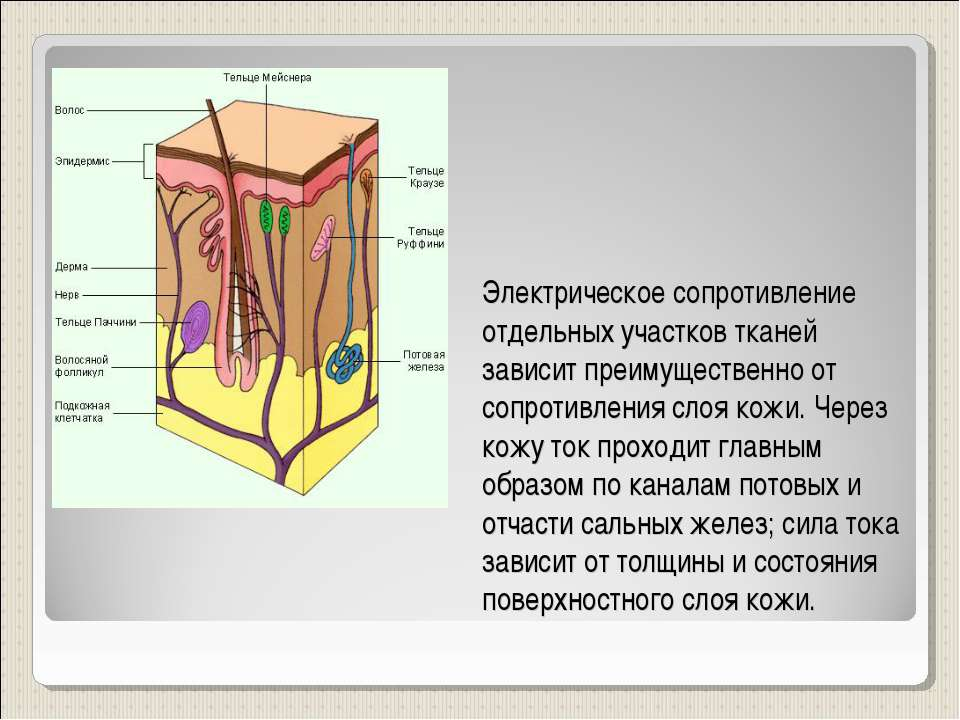 Электрическое сопротивление отдельных участков тканей зависит преимущественно...