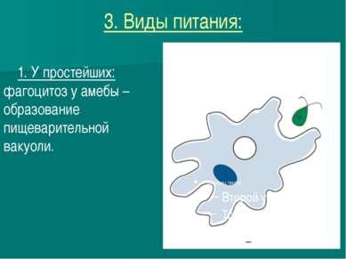 3. Виды питания: 1. У простейших: фагоцитоз у амебы – образование пищеварител...