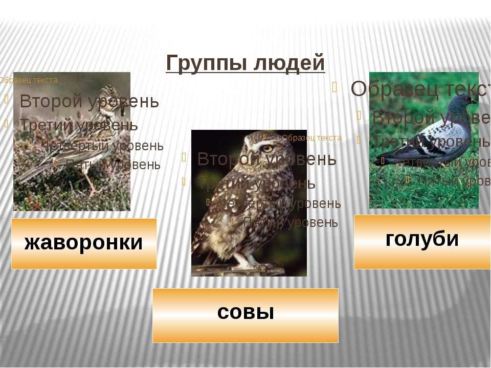 Группы людей голуби совы жаворонки