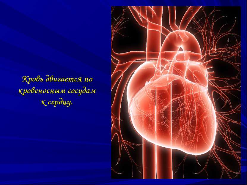 Кровь двигается по кровеносным сосудам к сердцу.