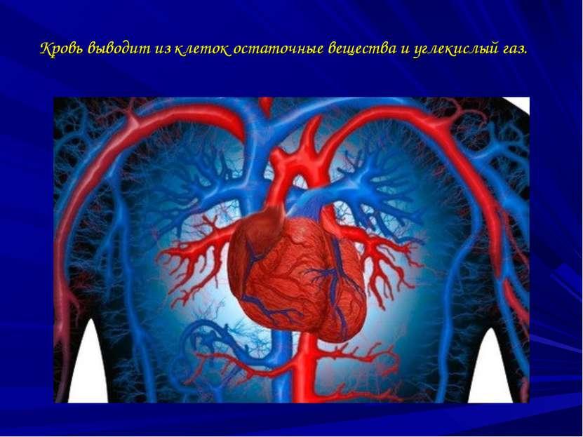 Кровь выводит из клеток остаточные вещества и углекислый газ.