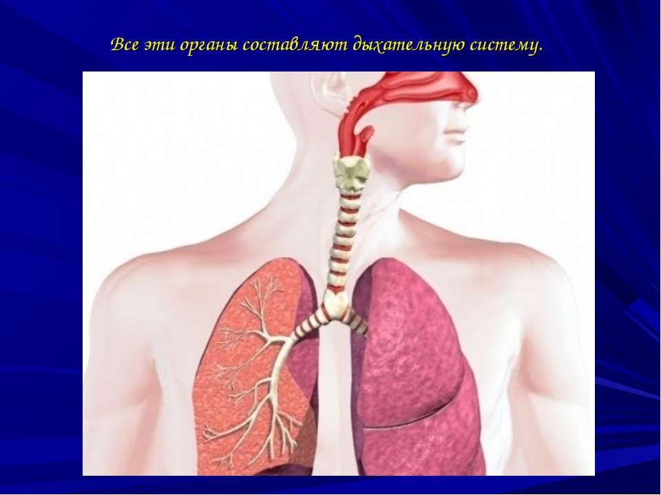 Все эти органы составляют дыхательную систему.