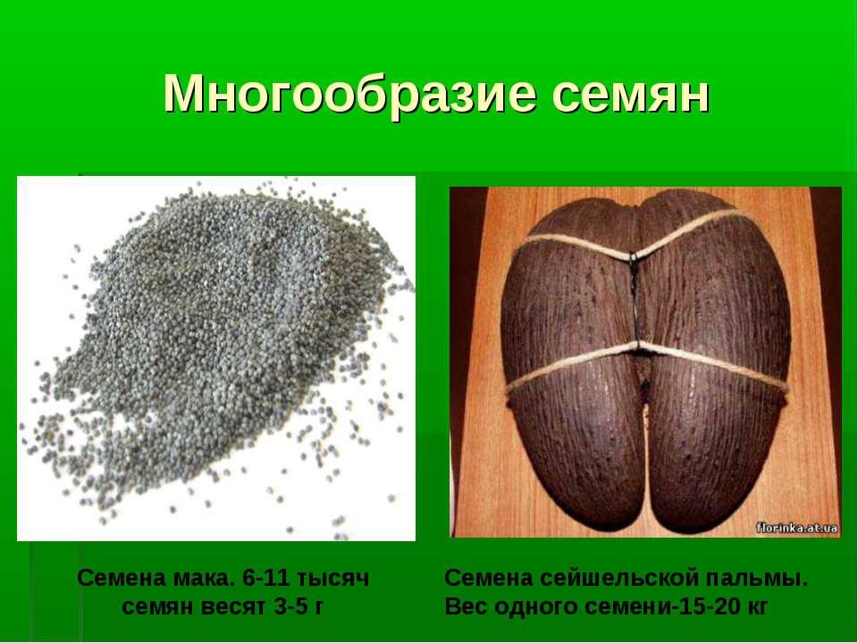 Многообразие семян Семена мака. 6-11 тысяч семян весят 3-5 г Семена сейшельск...