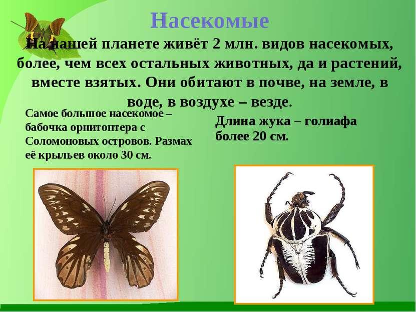 Насекомые На нашей планете живёт 2 млн. видов насекомых, более, чем всех оста...