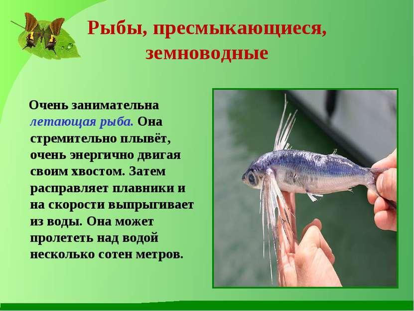 Рыбы, пресмыкающиеся, земноводные Очень занимательна летающая рыба. Она стрем...