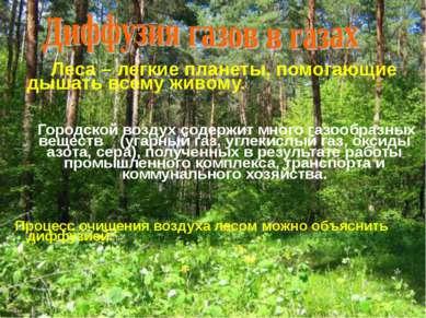 Леса – легкие планеты, помогающие дышать всему живому. Городской воздух содер...