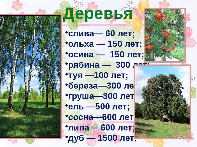 Деревья слива— 60 лет; ольха — 150 лет; осина — 150 лет; рябина — 300 лет; ту...
