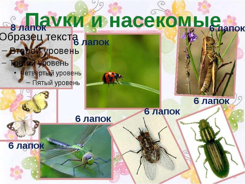 Пауки и насекомые 6 лапок 8 лапок 6 лапок 6 лапок 6 лапок 6 лапок 6 лапок