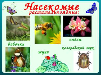 Насекомые растительноядные: бабочки пчёлы жуки колорадский жук
