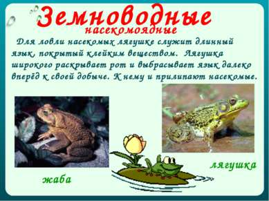 Земноводные насекомоядные Для ловли насекомых лягушке служит длинный язык, по...