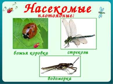 Насекомые плотоядные: божья коровка стрекозы водомерка