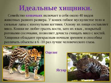 Идеальные хищники. Семейство кошачьих включает в себя около 40 видов животных...