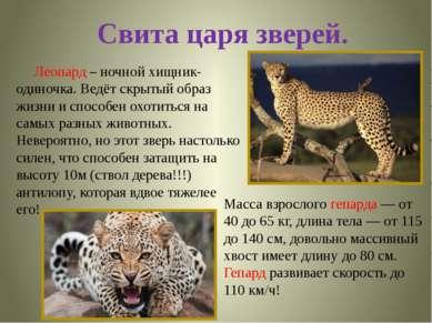 Свита царя зверей. Масса взрослого гепарда — от 40 до 65 кг, длина тела — от ...