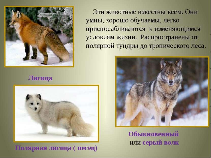 Эти животные известны всем. Они умны, хорошо обучаемы, легко приспосабливаютс...