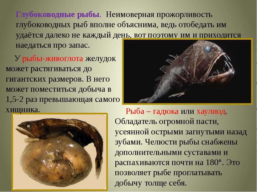 Глубоководные рыбы. Неимоверная прожорливость глубоководных рыб вполне объясн...