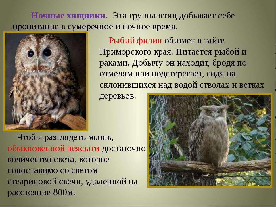 Ночные хищники. Эта группа птиц добывает себе пропитание в сумеречное и ночно...