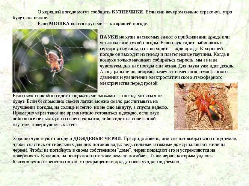 Животные барометры в природе