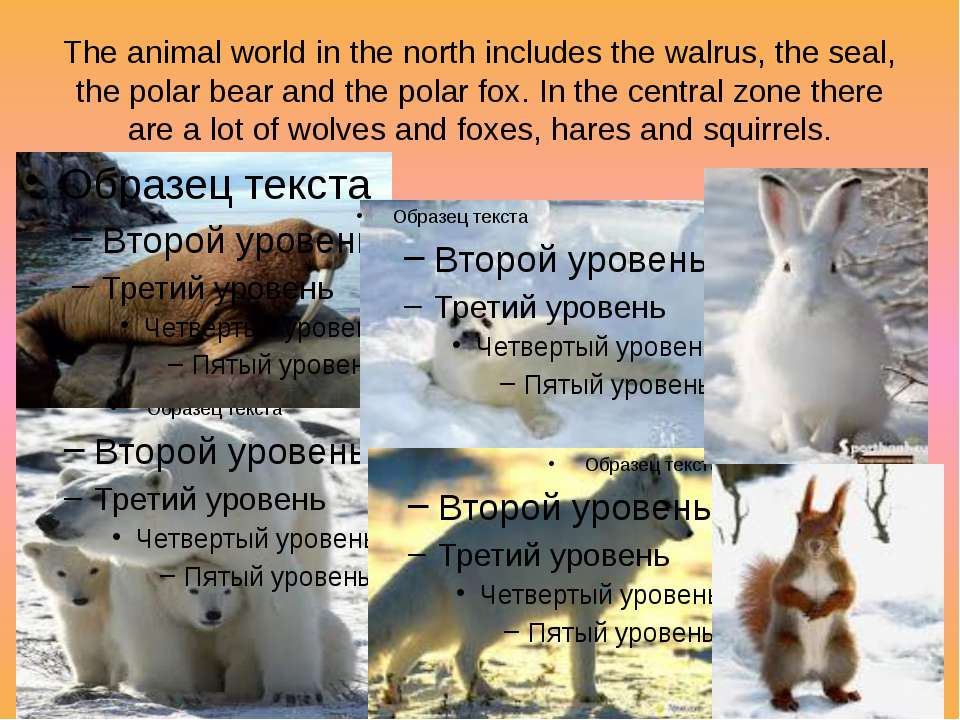 The animal world in the north includes the walrus, the seal, the polar bear a...