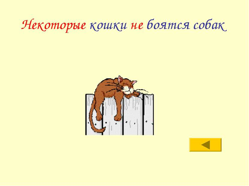 Некоторые кошки не боятся собак