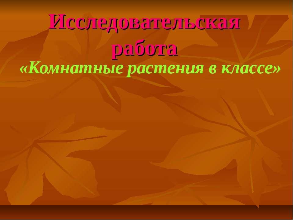 Исследовательская работа «Комнатные растения в классе»