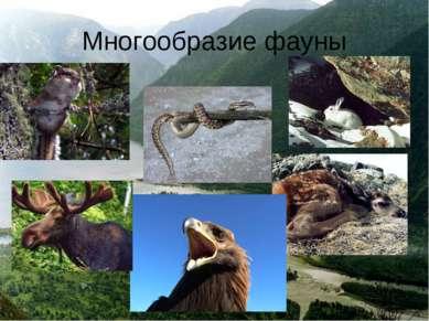 Многообразие фауны