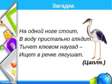 Интернет ресурсы: http://www.lenagold.ru/ - картинки-отгадки Загадки для дете...