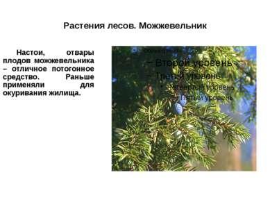 Растения лесов. Можжевельник Настои, отвары плодов можжевельника – отличное п...