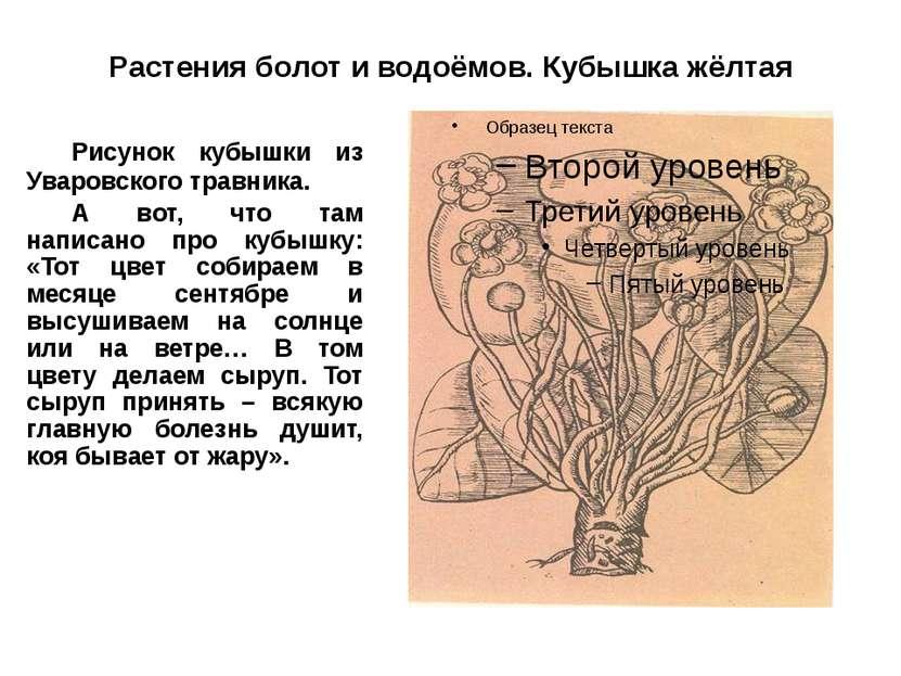 Растения болот и водоёмов. Кубышка жёлтая Рисунок кубышки из Уваровского трав...