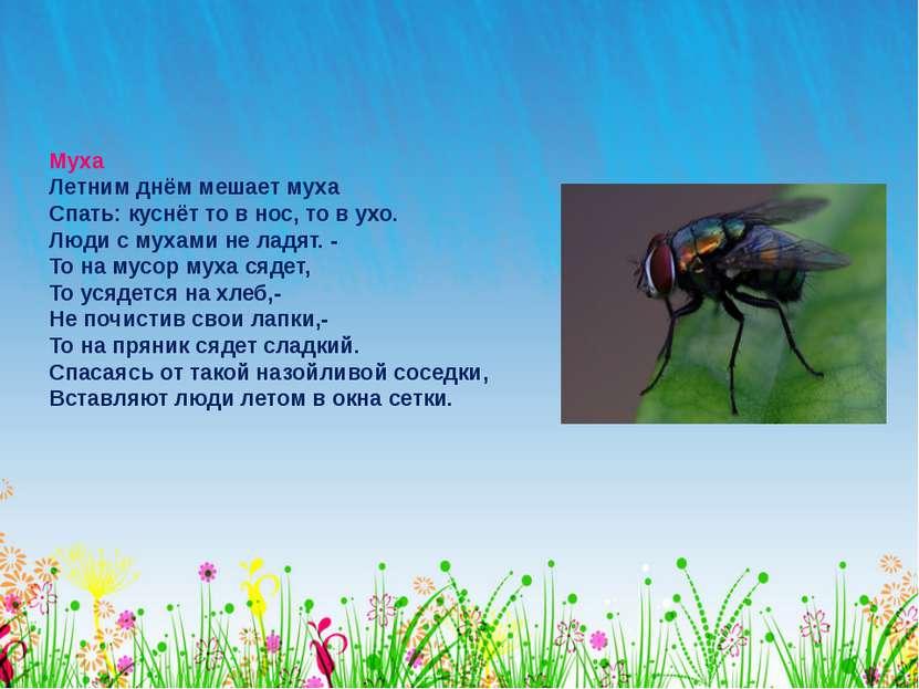 Муха Летним днём мешает муха Спать: куснёт то в нос, то в ухо. Люди с мухами ...