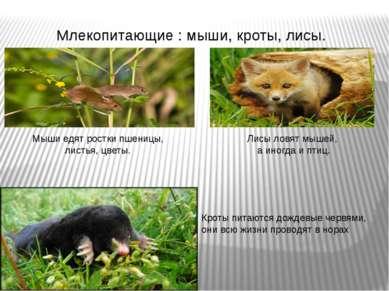 Млекопитающие : мыши, кроты, лисы. Кроты питаются дождевые червями, они всю ж...