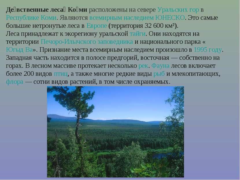 Де вственные леса Ко ми расположены на севере Уральских гор в Республике Коми...