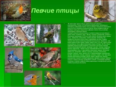 Певчие птицы Во всем мире певчие птицы имеют большой интерес и популярность. ...