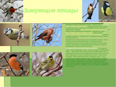 Зимующие птицы Издревне в России содержали в домах и певчих птиц и зимующих п...