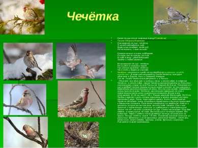 Чечётка Какая птица носит название танца? (чечётка) Галина Оборина-Морозова И...