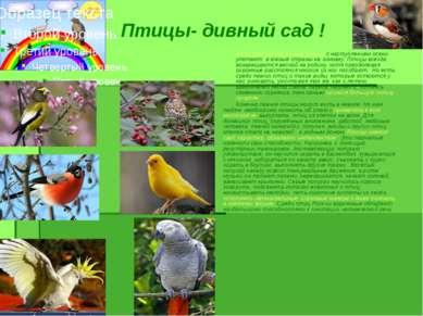 Птицы- дивный сад ! Наши российские певчие птицы с наступлением осени улетают...