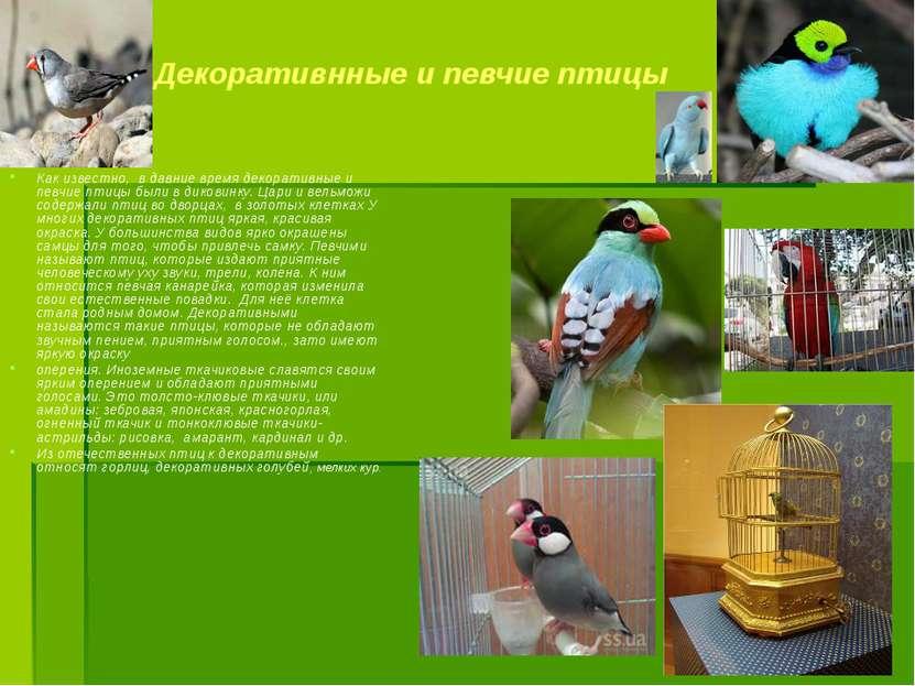 Декоративнные и певчие птицы Как известно, в давние время декоративные и певч...